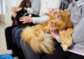 Care Of Maine Coon