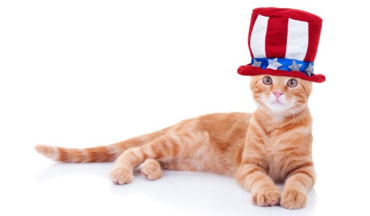 American Cat Fanciers Association