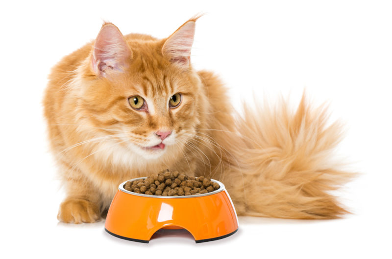 Maine Coon Food