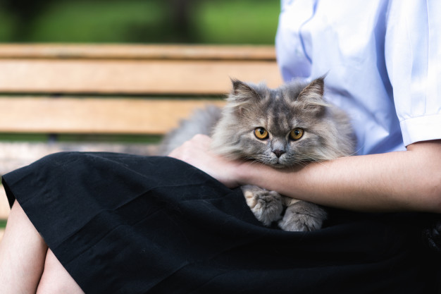 Personality of Siberian Cat