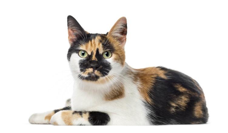 Polydactyl Cats Behavior