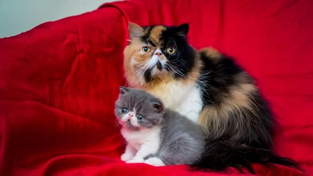 domestic cats and purebred cats