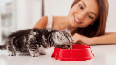 feed kittens
