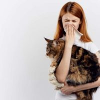 What are Maine Coon Allergies? | Mainecooncompanion